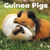 Guinea pigs; by Lisa J. Amstutz