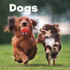 Dogs; by Lisa J. Amstutz
